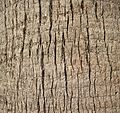 A close up shot of a palm tree trunk texture.jpg