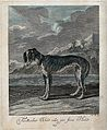A greyhound standing by the sea with exotic vegetation in th Wellcome V0021091.jpg