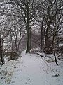 A snowy walk through the trees - geograph.org.uk - 1143875.jpg