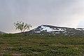A tree and a mountain along the Padjelantaleden (DSCF1065).jpg