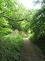 A wavy fence within Warren Copse - geograph.org.uk - 1325102.jpg