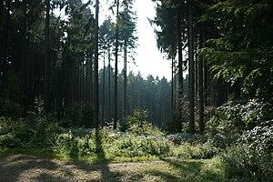 Aachen Forest - Aachen Forest, near the Zyklopensteine
