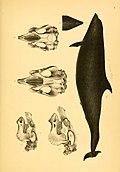 Abhandlungen aus dem Gebiete der Zoologie und vergleichenden Anatomie (1841) (16095238834).jpg