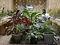 Aburi garden 21.jpg