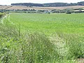 Across the Fields - geograph.org.uk - 490918.jpg