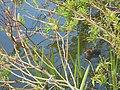 Acton Park lake, Wrexham (23).JPG