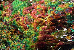 Aegirine siberia1.jpg