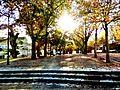 Alameda Sesmeros-Por la tarde (15369388853).jpg