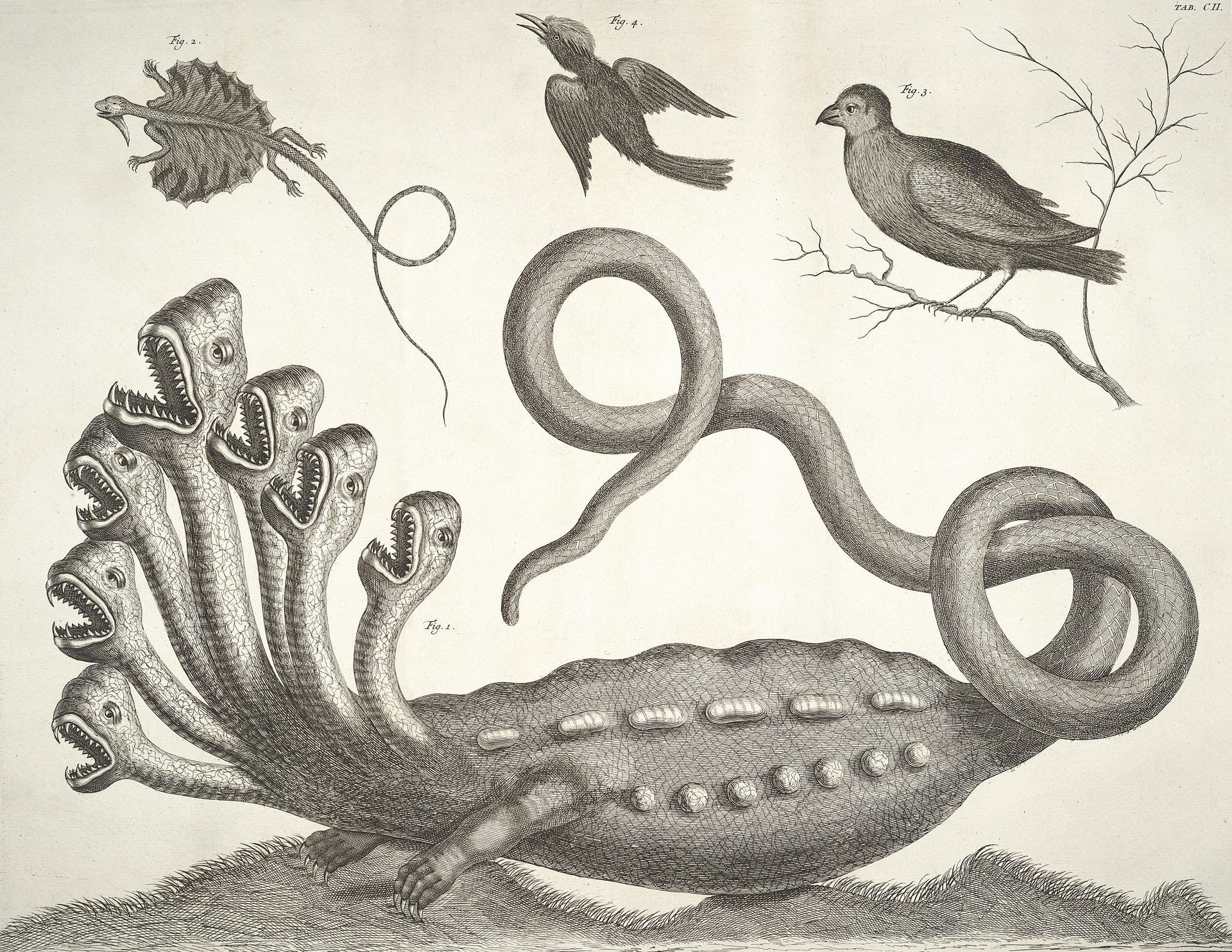 The Hamburg Hydra, from the Thesaurus (1734)