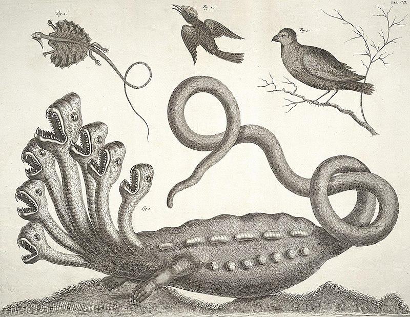 Albertus Seba - Hydra.jpg