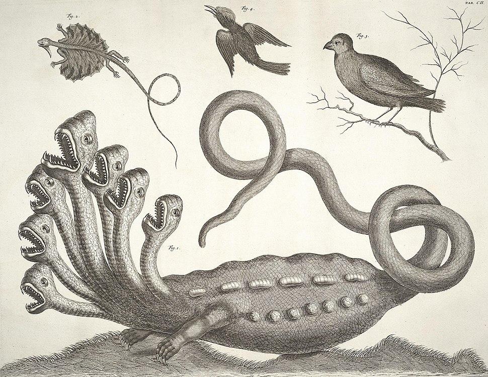 Albertus Seba - Hydra