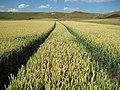 Alton Barnes, Arable farmland and the White Horse - geograph.org.uk - 1407173.jpg