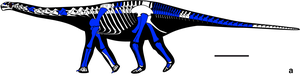Amanzia reconstruction (cropped).png