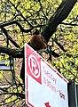 American robin on parking sign.jpg