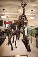 Anatotitan AMNH.jpg
