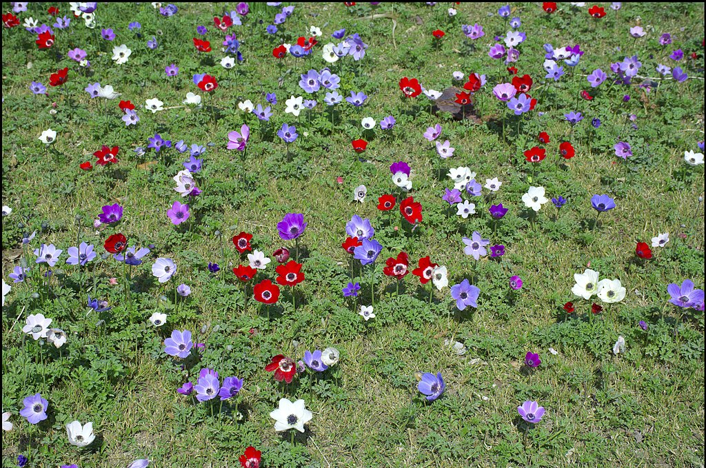 colorful flowers in the field