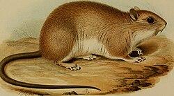 Annali del Museo civico di storia naturale di Genova (1880) (17788593324).jpg