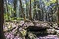 Aokigara forest near wind cave 02.jpg