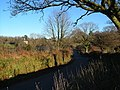 Approaching Cudlipptown - geograph.org.uk - 297245.jpg