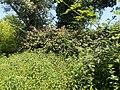 Arbusti e alberi alla riserva.jpg