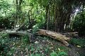 Arun river bank rotting logs at Nuthurst, West Sussex, England.jpg
