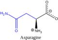 Asparaginebiocond.PNG
