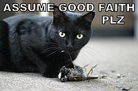 Assume good faith lolcat.jpg