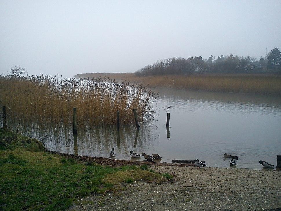 At Brabrand Lake
