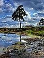Atomiс tree - panoramio.jpg