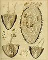 Atti del Reale Istituto d'Incoraggiamento alle Scienze Naturali di Napoli (1828) (20340231032).jpg