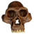 Australopithecus Afarensis - Transparent Background.png