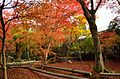 Autumn foliage 2012 (8253632702).jpg