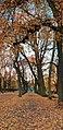Autumn in Vallaskogen.jpg
