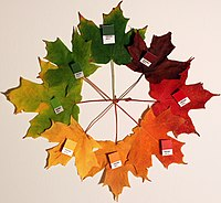 Autumn leaves (pantone) crop.jpg