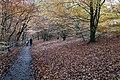 Autumn leaves in Linn Park, Glasgow.jpg