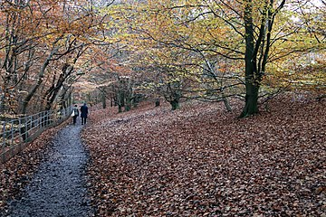 Autumn leaves in Linn Park, Glasgow.jpg