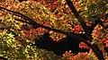 Autumn red - panoramio.jpg