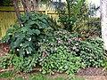 Backyard Garden Scene (10061346296).jpg