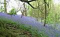 Badby Woods - geograph.org.uk - 105873.jpg