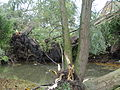 Bailleul - Dégâts causés par la tornade du 20 octobre 2013 (B29).JPG