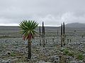 Bale Mountain, Ethiopia.jpg