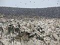 Ballestas Islands, Peru - panoramio (3).jpg