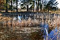 Bayern Erlangen Naturschutzgebiet Exerzierplatz Winter 2.jpg