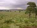 Beaulieu Heath East towards Dibden Bottom, New Forest - geograph.org.uk - 32381.jpg