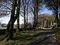 Beeches along the drive from Prince Hall Hotel - geograph.org.uk - 593765.jpg