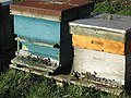 Beehives - geograph.org.uk - 329173.jpg