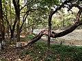 Beside lake at Bhawal National Park.jpg