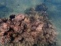 Big Island Reef (23757744700).jpg