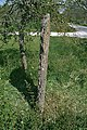 Bildsten Rute Stora Valle - KMB - 16000300017680.jpg