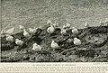 Bird-lore (1918) (14563713859).jpg